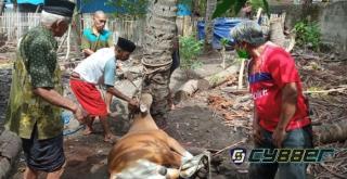 Pemkab dan Masyarakat Selayar Sembelih 168 Ekor Hewan Kurban