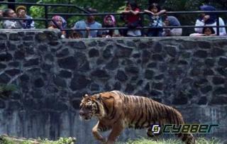 Tak Ada Dana Operasional, Sejumlah Hewan di Kebun Binatang Bandung Akan Dijadikan Makanan Harimau dan Macan Tutul