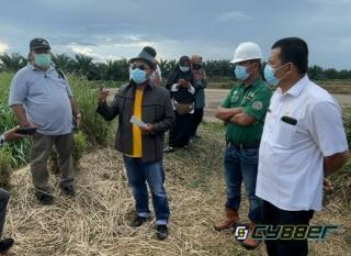 Air Baku Limbah Pabrik PT. Asia Sawit Makmur Jaya Diduga Cemari Sungai Bawang