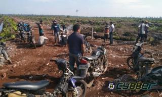 Hutan Kawasan Siak Kecil Disulap Menjadi Perkebunan Kelapa Sawit