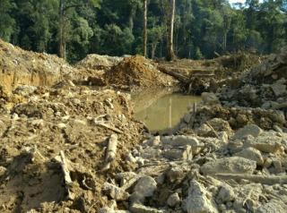 Hutan Riau Aset Termahal, PT CPI Harus Bertanggung Jawab Atas Kerusakan Lingkungan Yang Diciptakannya